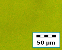 nanoencapsulation-b (1)