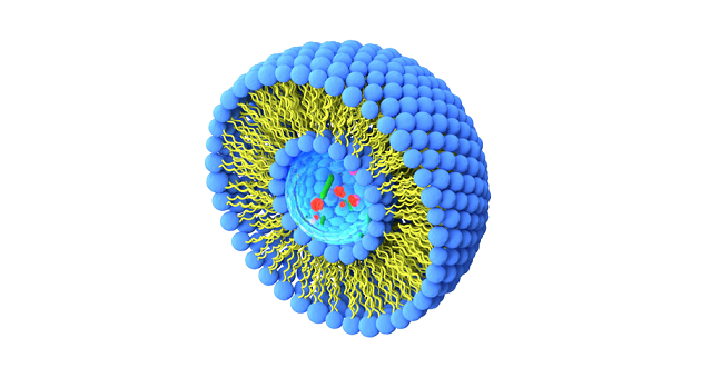 liposomes structure for blog