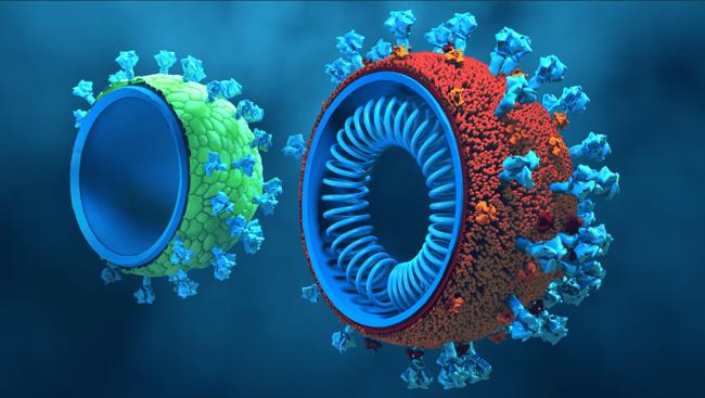 vaccine-cells-blog